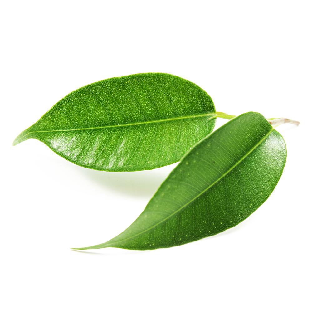 biolys_be_the-vert